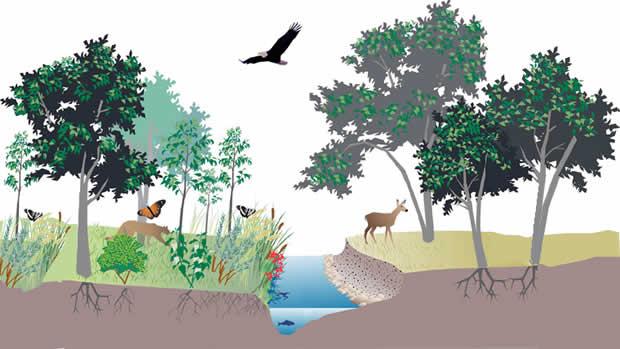 Index Of Info 06 Biodiverzitet Ekosistem I