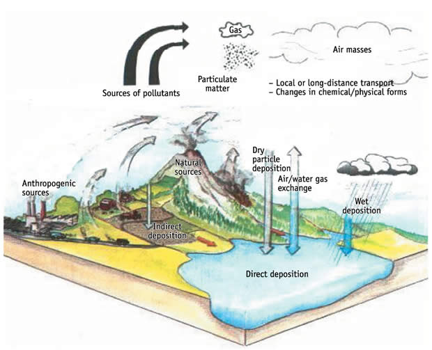 density dependence and its effects in ecosystems environmental sciences essay Environmental pollution is damaging the ecosystem and destroying the delicate balance of the natural ecosystem so, now-a-days environmental pollution is the matter of great concern and consideration for which we all together follow some effective steps and carry on until problems gets solved completely.